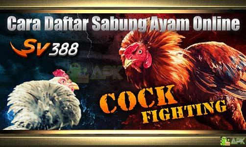 Cara Daftar SV388 » Ciri Agen Sabung Ayam Online Terpercaya